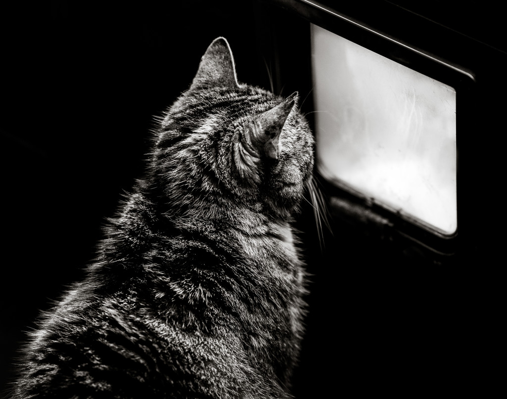 Low Key:  Cat TV by vignouse