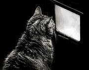 23rd Feb 2020 - Low Key:  Cat TV