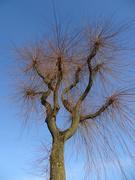 24th Feb 2020 - tree