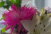 15th Feb 2020 - February Words - Flowers