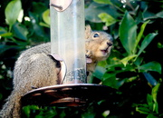 23rd Feb 2020 - Look Who's on the Bird Feeder