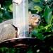 Look Who's on the Bird Feeder