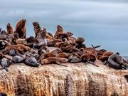 24th Feb 2020 - Seal Island