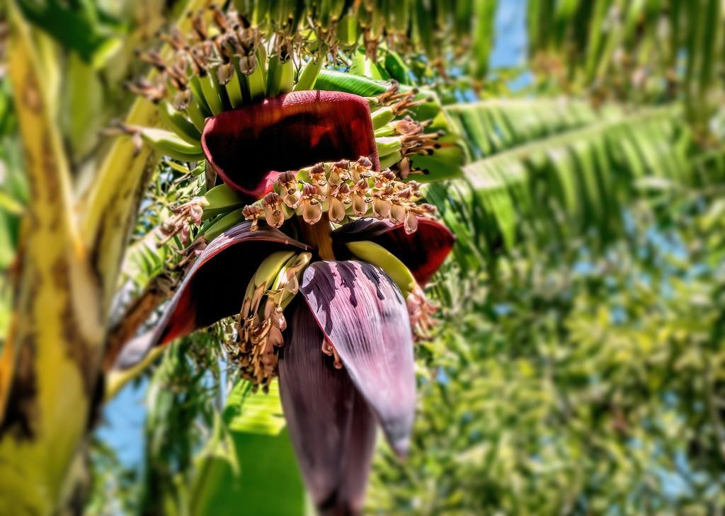 Tiny Bananas by ludwigsdiana