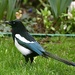 One for Sorrow....