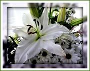 24th Feb 2020 - White Lily