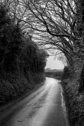24th Feb 2020 - The lane