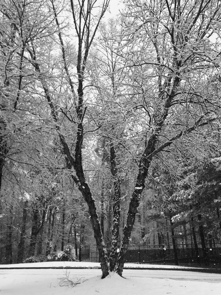 More snow by tara11