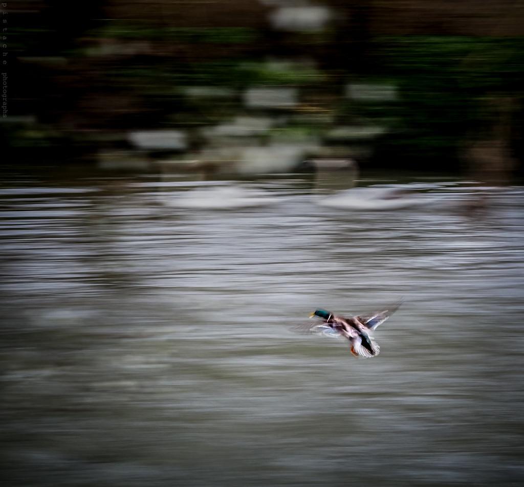 taking flight by pistache