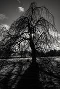 24th Feb 2020 - Scary Tree