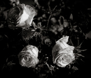 24th Feb 2020 - Low Key:  Valentine Roses