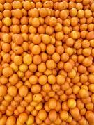 26th Feb 2020 - Orange oranges.