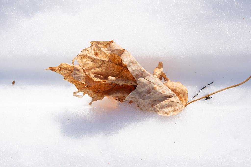 February Words - Leaves by farmreporter