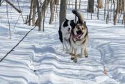 24th Feb 2020 - 52 Week Challenge - Pets
