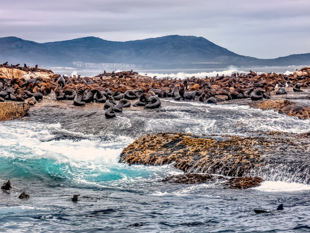 Seal Island by ludwigsdiana