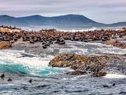 25th Feb 2020 - Seal Island