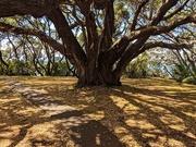 25th Feb 2020 - A hope tree