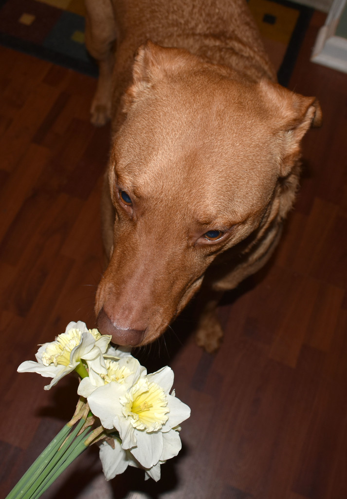 Stop and smell the daffodils! by homeschoolmom
