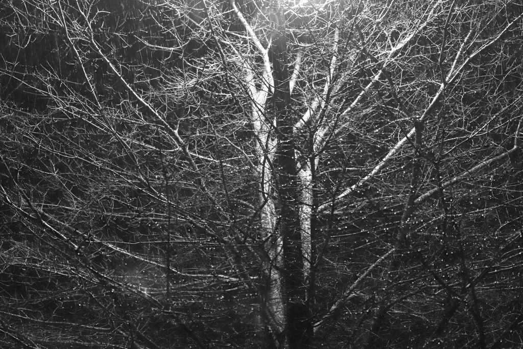 Another Rainy Night by jnorthington