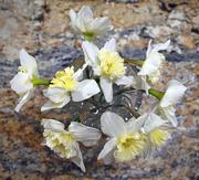 22nd Feb 2020 - Daffodil Bouquet