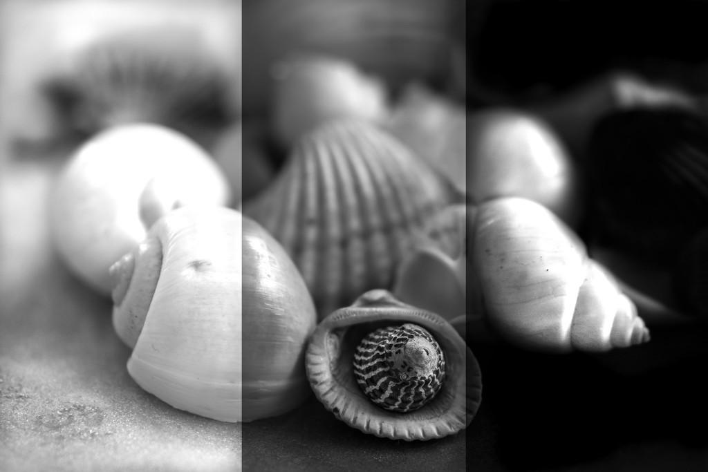 Shell play  by sugarmuser