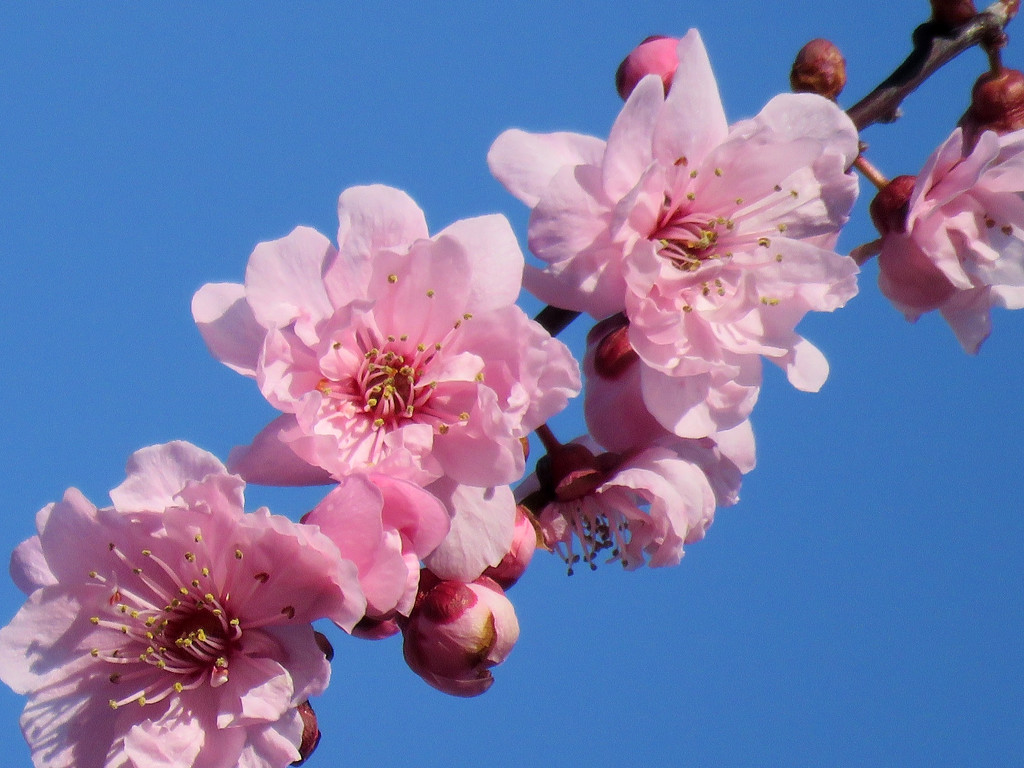 Tree Blossoms by seattlite
