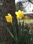 25th Feb 2020 - Spring has sprung