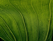 25th Feb 2020 - Spring Greens