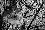 25th Feb 2020 - Squirrel, in Low Key