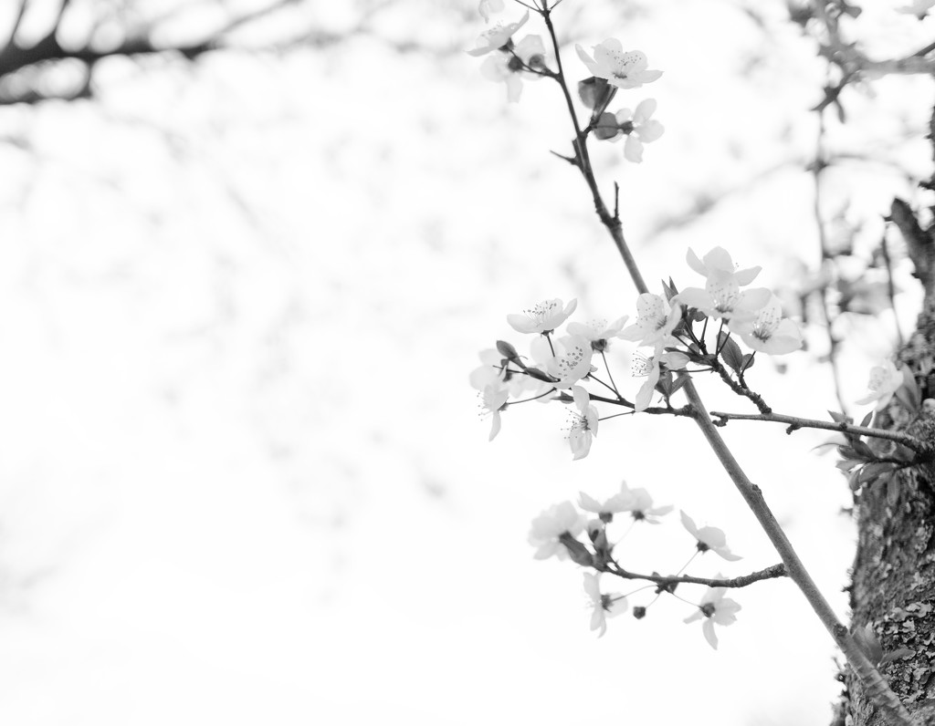 High key blossoms by cristinaledesma33