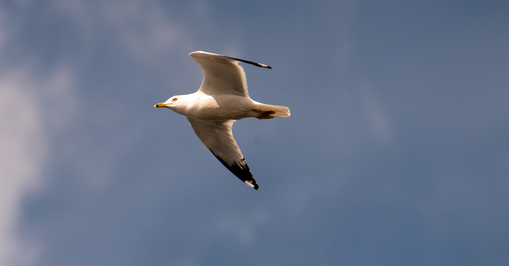 Seagull Floating By! by rickster549