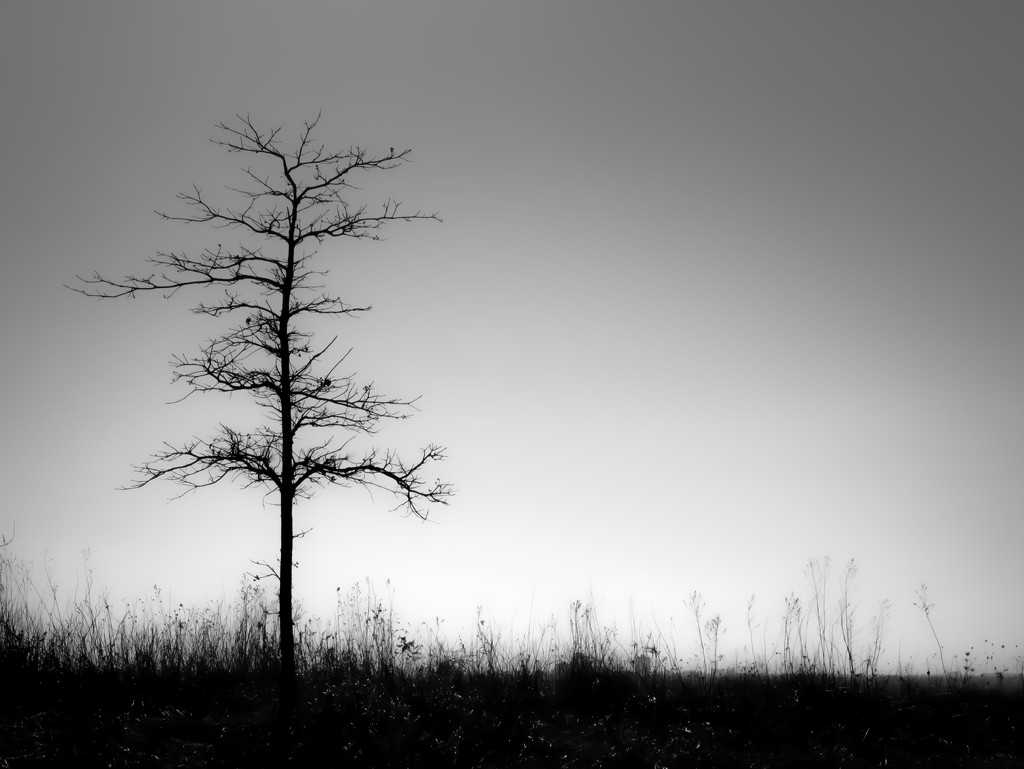 the tree... by northy