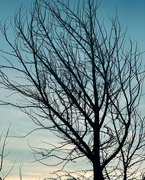 25th Feb 2020 - bare tree, sunset, and a bird