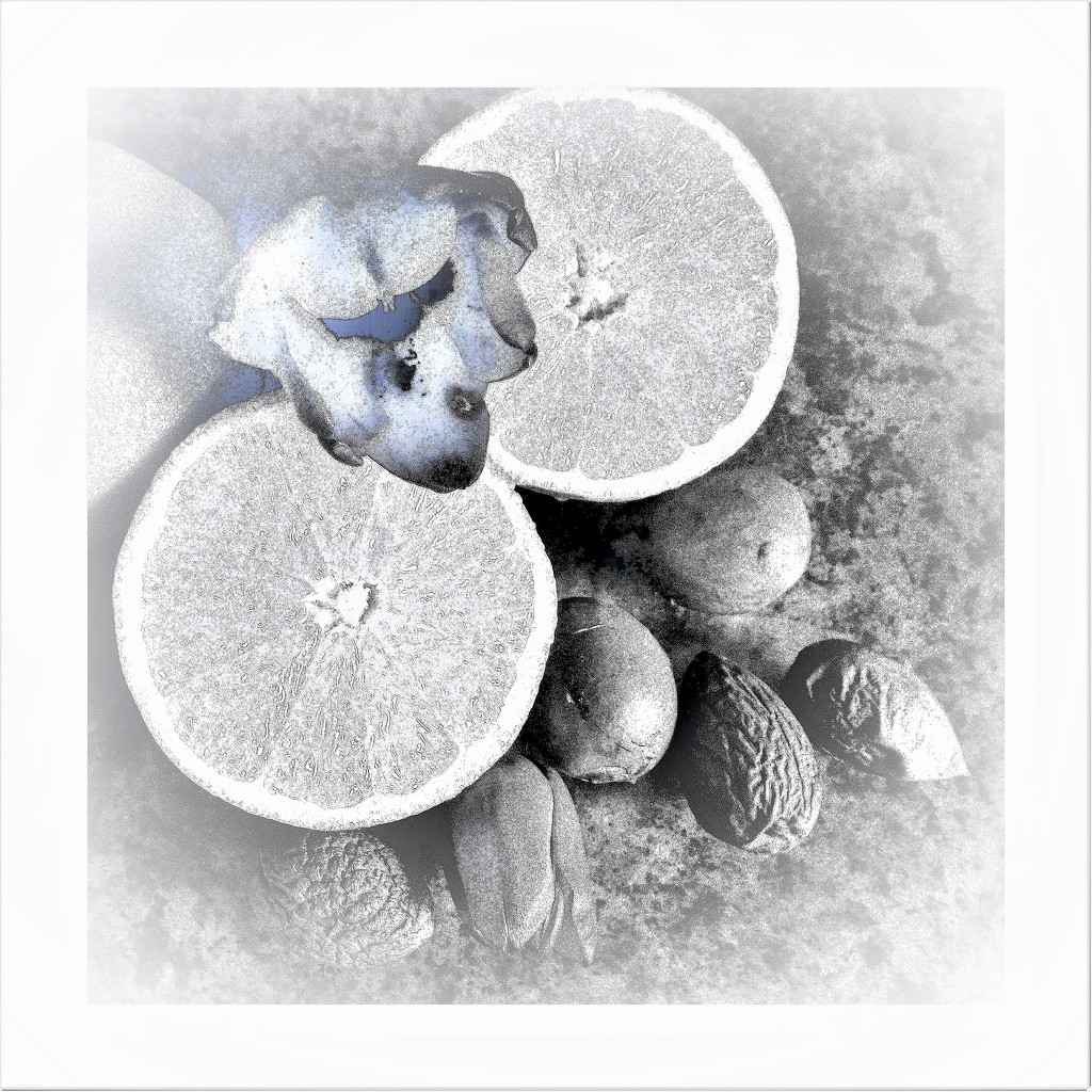 Oranges and nuts - HK  by beryl