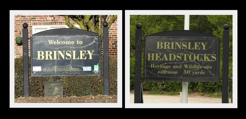 Brinsley by oldjosh