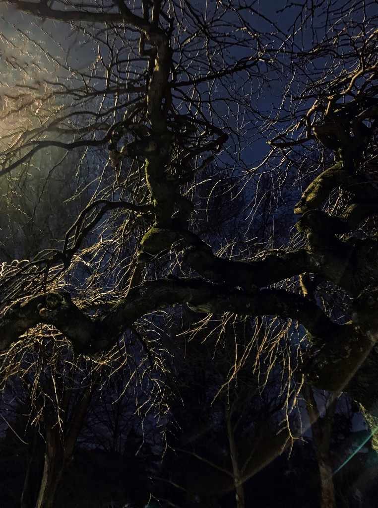 Tree at night  by caterina
