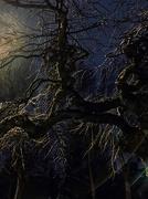 26th Feb 2020 - Tree at night