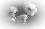 26th Feb 2020 - High key flowers