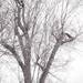 High Key Tree Top