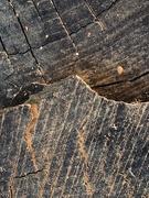 26th Feb 2020 - wood grains tell a story