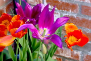 26th Feb 2020 - Purple and Orange Bulbs
