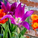 Purple and Orange Bulbs by redy4et