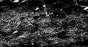 25th Feb 2020 - Frogs Eggs Low Key