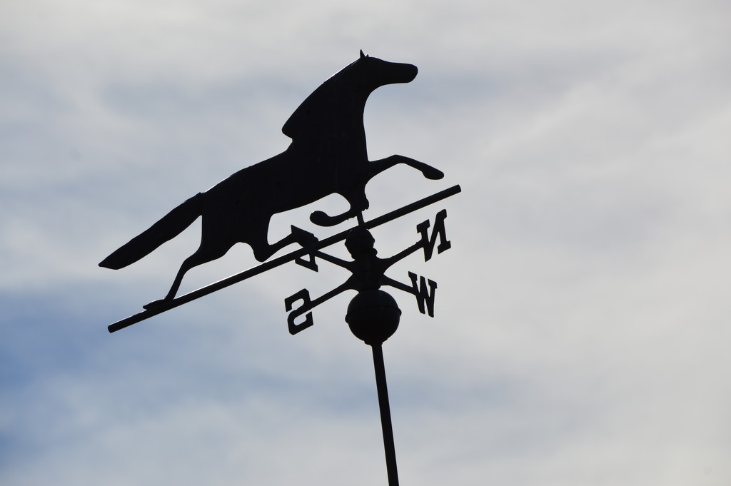 Weather Vane At Ponderosa Winery by bigdad