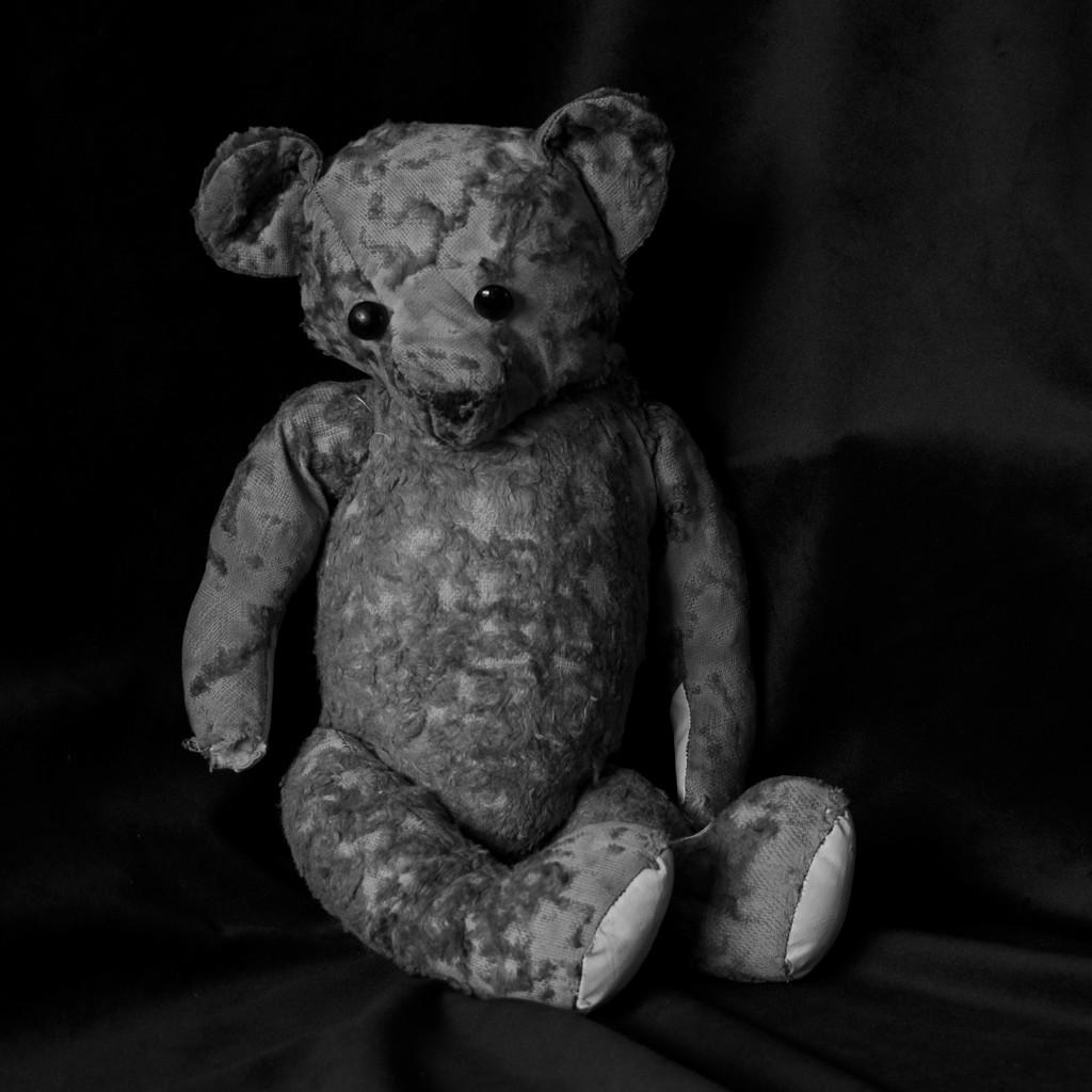 Ted In Low Key DSC_7215 by merrelyn