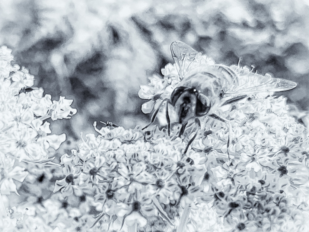 Busy Bee by pamknowler