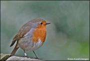 27th Feb 2020 - My usual friendly robin