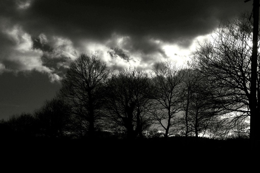 Afternoon Drama by s4sayer