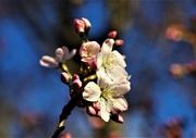 27th Feb 2020 - Spring