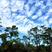 Florida Winter by danette